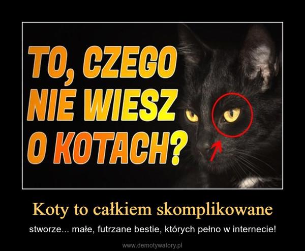 Koty to całkiem skomplikowane – stworze... małe, futrzane bestie, których pełno w internecie!