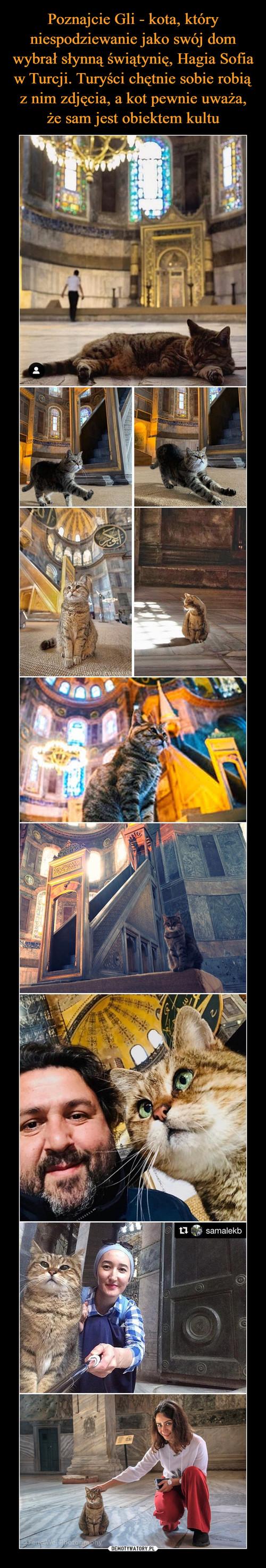 Poznajcie Gli - kota, który niespodziewanie jako swój dom wybrał słynną świątynię, Hagia Sofia w Turcji. Turyści chętnie sobie robią z nim zdjęcia, a kot pewnie uważa, że sam jest obiektem kultu