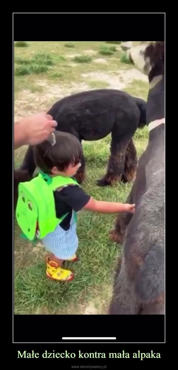Małe dziecko kontra mała alpaka –