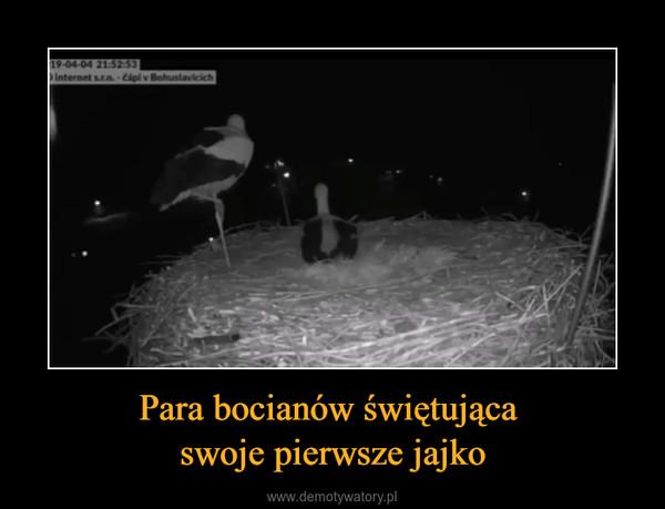 Para bocianów świętująca swoje pierwsze jajko –