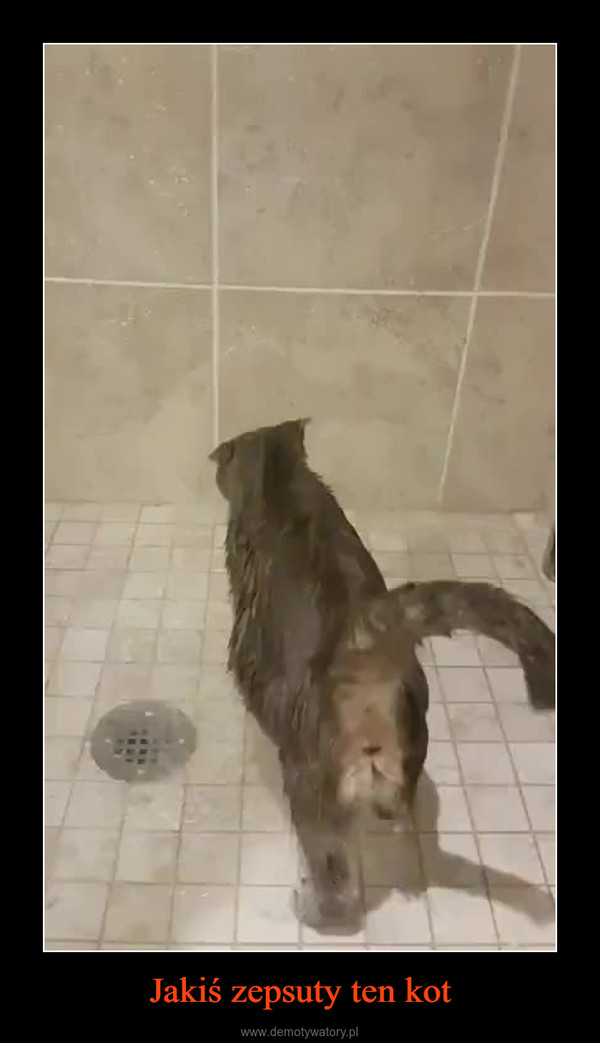 Jakiś zepsuty ten kot –