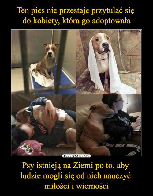 Ten pies nie przestaje przytulać się  do kobiety, która go adoptowała Psy istnieją na Ziemi po to, aby  ludzie mogli się od nich nauczyć  miłości i wierności