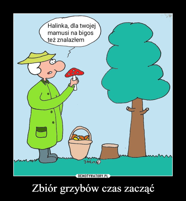 Zbiór grzybów czas zacząć –  Halinka, dla twojej mamusi na bigos też znalazłem
