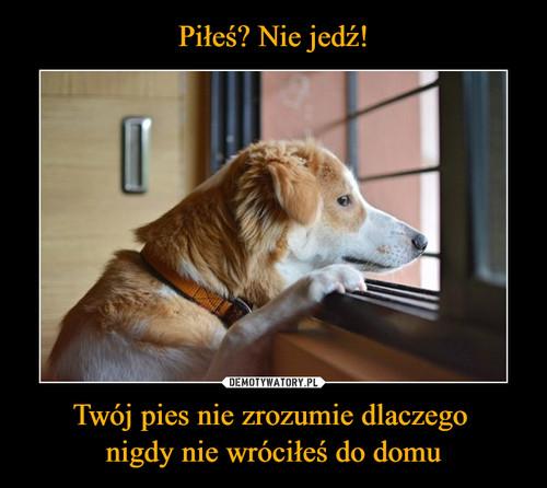 Piłeś? Nie jedź! Twój pies nie zrozumie dlaczego  nigdy nie wróciłeś do domu