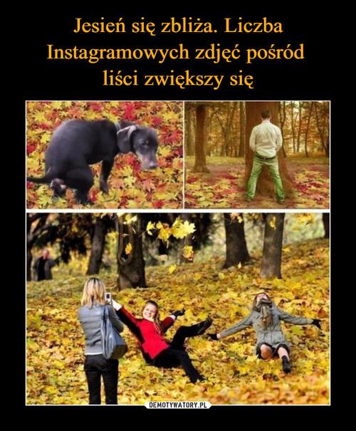 Jesień się zbliża. Liczba Instagramowych zdjęć pośród  liści zwiększy się