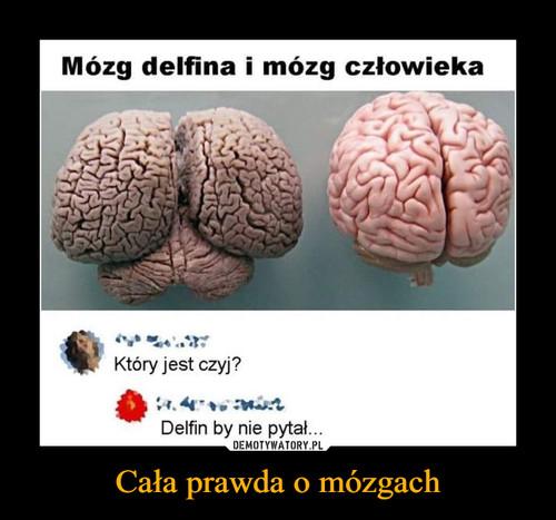 Cała prawda o mózgach