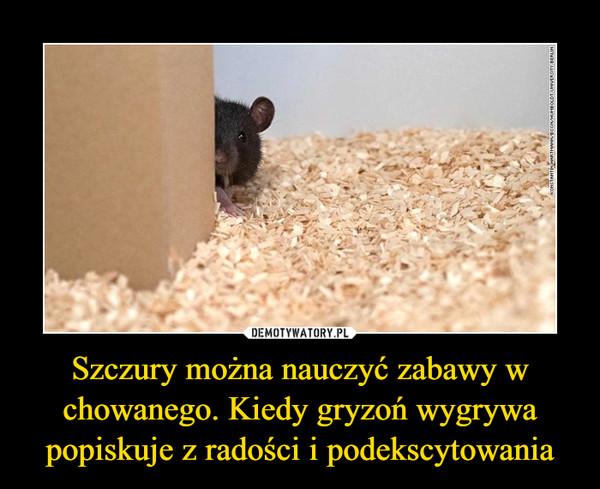Szczury można nauczyć zabawy w chowanego. Kiedy gryzoń wygrywa popiskuje z radości i podekscytowania –