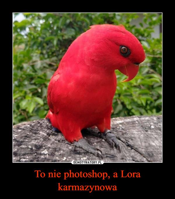 To nie photoshop, a Lora karmazynowa –
