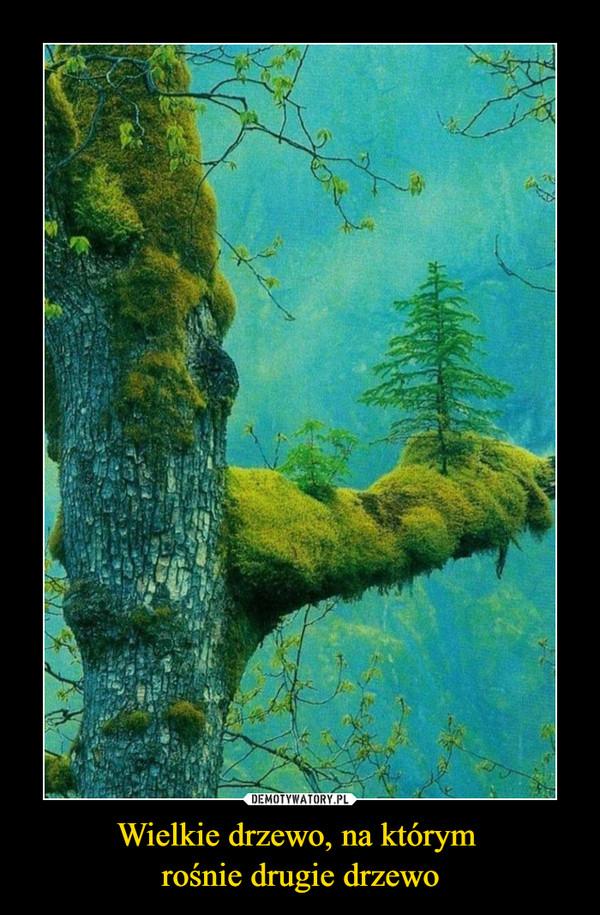 Wielkie drzewo, na którym rośnie drugie drzewo –