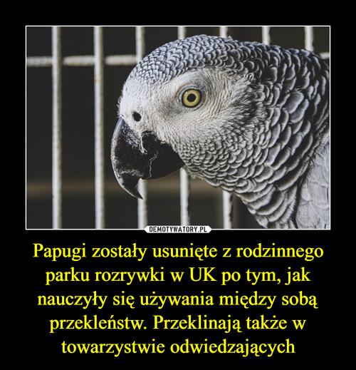 Papugi zostały usunięte z rodzinnego parku rozrywki w UK po tym, jak nauczyły się używania między sobą przekleństw. Przeklinają także w towarzystwie odwiedzających