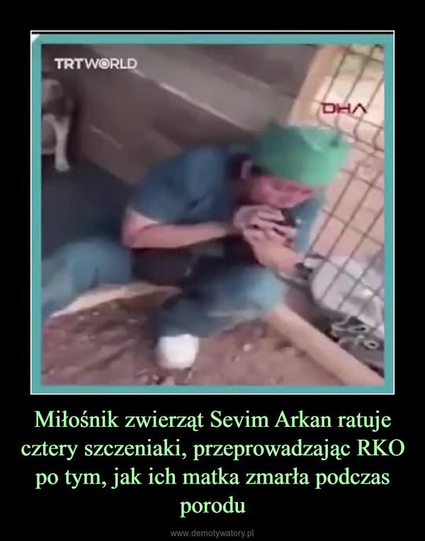 Miłośnik zwierząt Sevim Arkan ratuje cztery szczeniaki, przeprowadzając RKO po tym, jak ich matka zmarła podczas porodu –