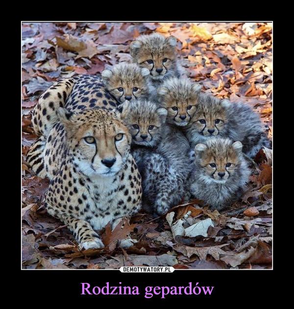 Rodzina gepardów –