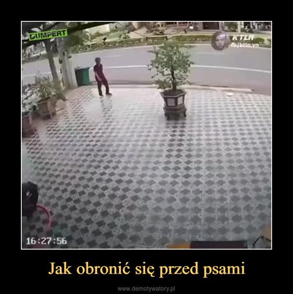 Jak obronić się przed psami –