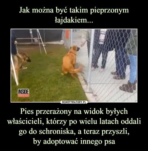Jak można być takim pieprzonym łajdakiem... Pies przerażony na widok byłych właścicieli, którzy po wielu latach oddali go do schroniska, a teraz przyszli, by adoptować innego psa