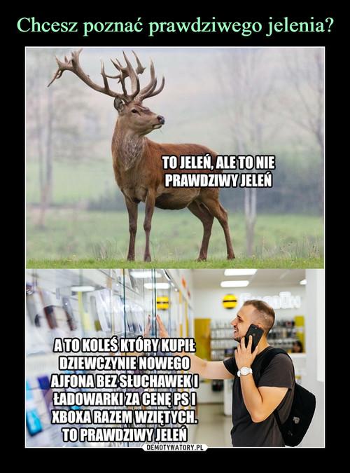 Chcesz poznać prawdziwego jelenia?