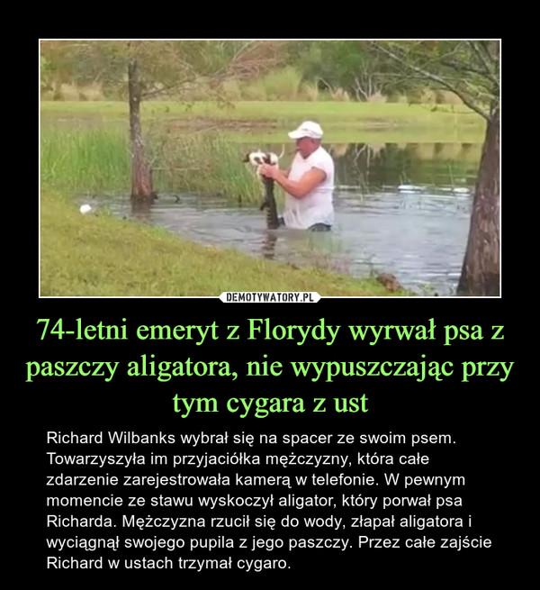 74-letni emeryt z Florydy wyrwał psa z paszczy aligatora, nie wypuszczając przy tym cygara z ust – Richard Wilbanks wybrał się na spacer ze swoim psem. Towarzyszyła im przyjaciółka mężczyzny, która całe zdarzenie zarejestrowała kamerą w telefonie. W pewnym momencie ze stawu wyskoczył aligator, który porwał psa Richarda. Mężczyzna rzucił się do wody, złapał aligatora i wyciągnął swojego pupila z jego paszczy. Przez całe zajście Richard w ustach trzymał cygaro.