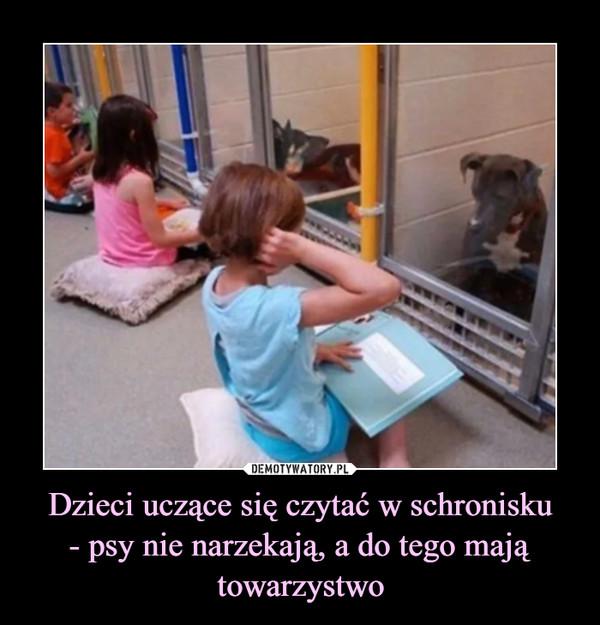 Dzieci uczące się czytać w schronisku- psy nie narzekają, a do tego mają towarzystwo –