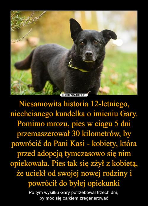 Niesamowita historia 12-letniego, niechcianego kundelka o imieniu Gary. Pomimo mrozu, pies w ciągu 5 dni przemaszerował 30 kilometrów, by powrócić do Pani Kasi - kobiety, która przed adopcją tymczasowo się nim opiekowała. Pies tak się zżył z kobietą, że uciekł od swojej nowej rodziny i powrócił do byłej opiekunki