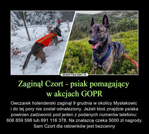 Zaginął Czort - psiak pomagający  w akcjach GOPR