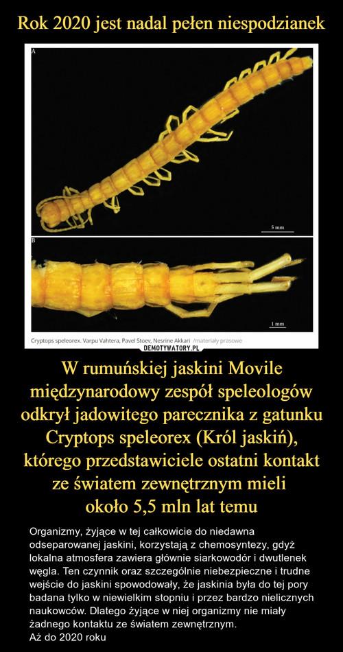 Rok 2020 jest nadal pełen niespodzianek W rumuńskiej jaskini Movile międzynarodowy zespół speleologów odkrył jadowitego parecznika z gatunku Cryptops speleorex (Król jaskiń), którego przedstawiciele ostatni kontakt ze światem zewnętrznym mieli  około 5,5 mln lat temu