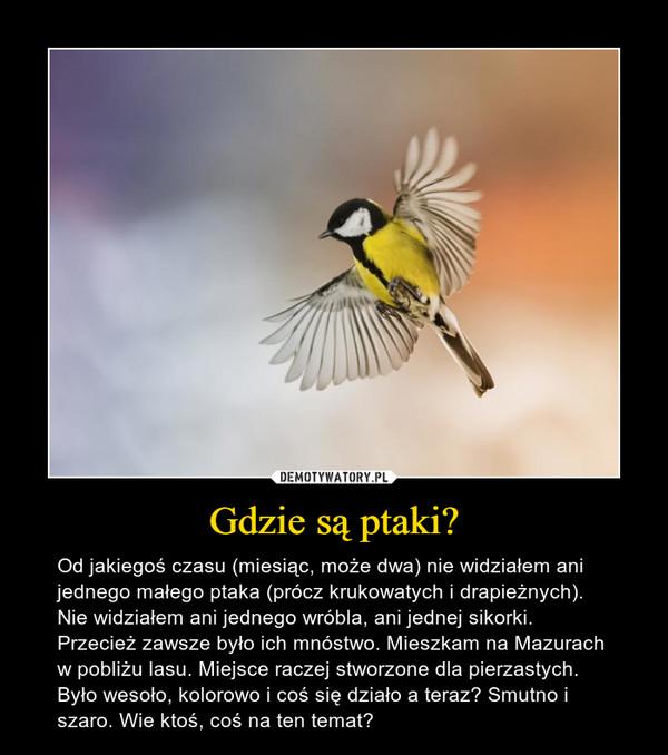 Gdzie są ptaki? – Od jakiegoś czasu (miesiąc, może dwa) nie widziałem ani jednego małego ptaka (prócz krukowatych i drapieżnych). Nie widziałem ani jednego wróbla, ani jednej sikorki. Przecież zawsze było ich mnóstwo. Mieszkam na Mazurach w pobliżu lasu. Miejsce raczej stworzone dla pierzastych. Było wesoło, kolorowo i coś się działo a teraz? Smutno i szaro. Wie ktoś, coś na ten temat?