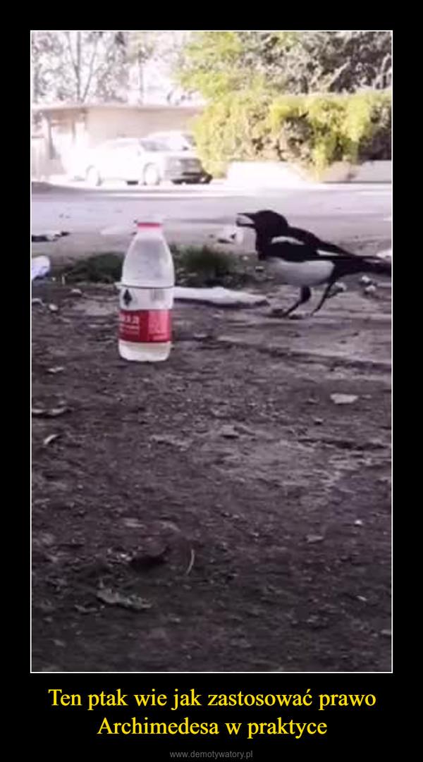 Ten ptak wie jak zastosować prawo Archimedesa w praktyce –