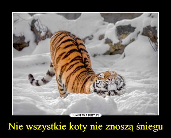 Nie wszystkie koty nie znoszą śniegu –