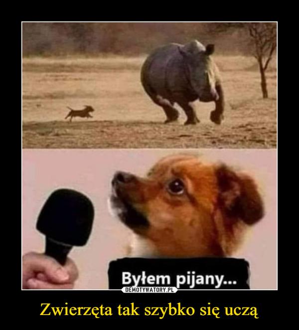 Zwierzęta tak szybko się uczą –  Byłem pijany...