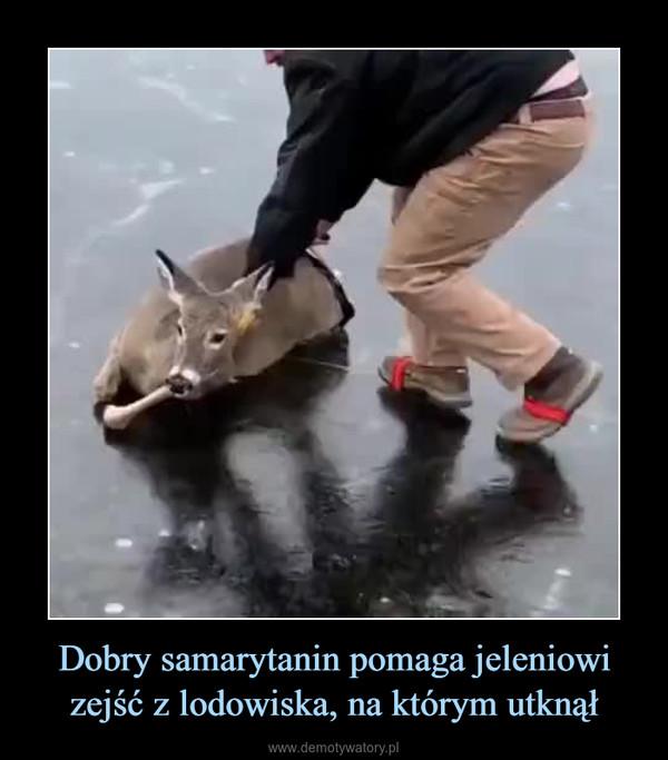 Dobry samarytanin pomaga jeleniowi zejść z lodowiska, na którym utknął –