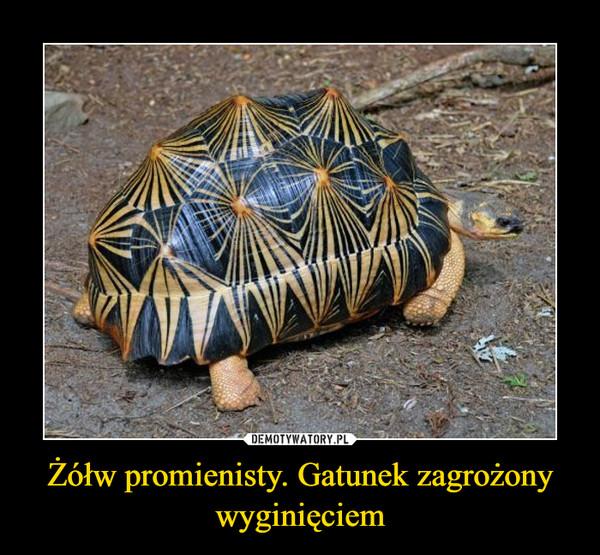 Żółw promienisty. Gatunek zagrożony wyginięciem –