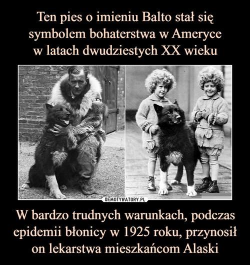 Ten pies o imieniu Balto stał się symbolem bohaterstwa w Ameryce w latach dwudziestych XX wieku W bardzo trudnych warunkach, podczas epidemii błonicy w 1925 roku, przynosił on lekarstwa mieszkańcom Alaski