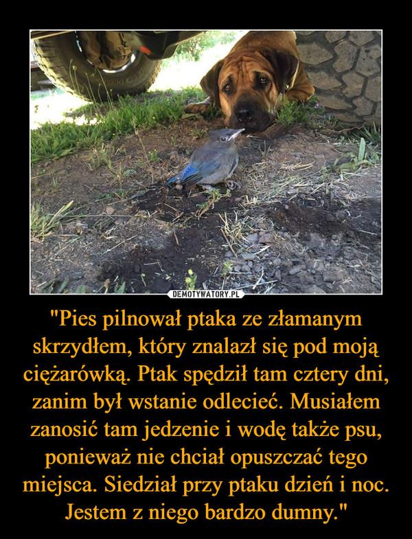 """""""Pies pilnował ptaka ze złamanym skrzydłem, który znalazł się pod moją ciężarówką. Ptak spędził tam cztery dni, zanim był wstanie odlecieć. Musiałem zanosić tam jedzenie i wodę także psu, ponieważ nie chciał opuszczać tego miejsca. Siedział przy ptaku dzień i noc. Jestem z niego bardzo dumny."""" –"""