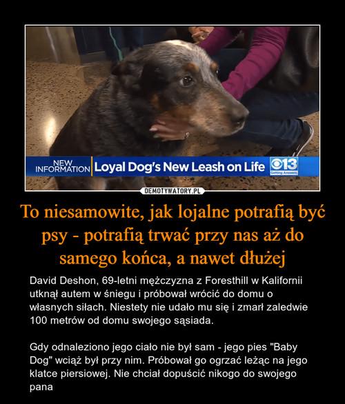 To niesamowite, jak lojalne potrafią być psy - potrafią trwać przy nas aż do samego końca, a nawet dłużej
