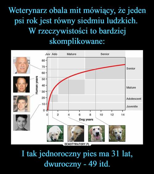 Weterynarz obala mit mówiący, że jeden psi rok jest równy siedmiu ludzkich.  W rzeczywistości to bardziej skomplikowane: I tak jednoroczny pies ma 31 lat, dwuroczny - 49 itd.