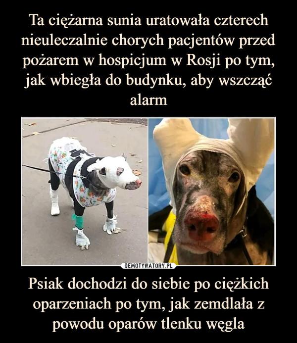 Psiak dochodzi do siebie po ciężkich oparzeniach po tym, jak zemdlała z powodu oparów tlenku węgla –