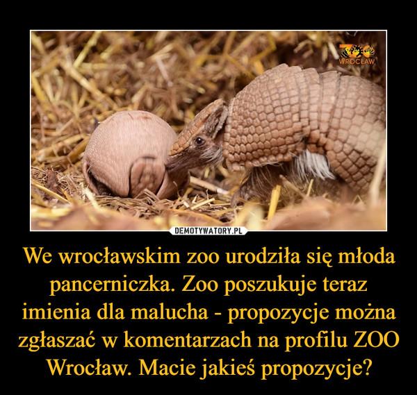 We wrocławskim zoo urodziła się młoda pancerniczka. Zoo poszukuje teraz imienia dla malucha - propozycje można zgłaszać w komentarzach na profilu ZOO Wrocław. Macie jakieś propozycje? –