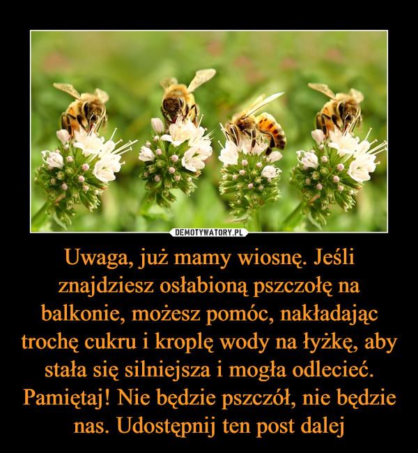 Uwaga, już mamy wiosnę. Jeśli znajdziesz osłabioną pszczołę na balkonie, możesz pomóc, nakładając trochę cukru i kroplę wody na łyżkę, aby stała się silniejsza i mogła odlecieć. Pamiętaj! Nie będzie pszczół, nie będzie nas. Udostępnij ten post dalej –