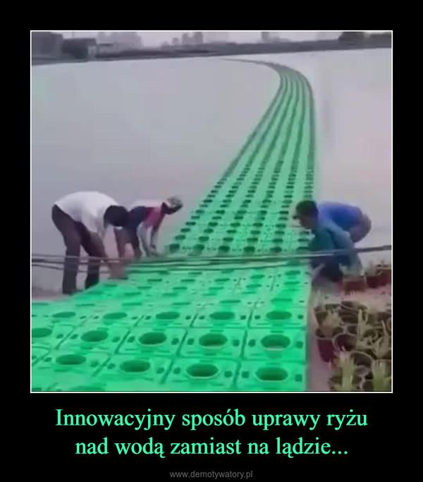 Innowacyjny sposób uprawy ryżunad wodą zamiast na lądzie... –