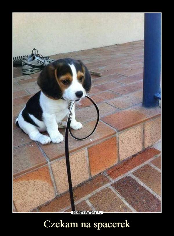 Czekam na spacerek –