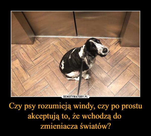 Czy psy rozumieją windy, czy po prostu akceptują to, że wchodzą do zmieniacza światów? –