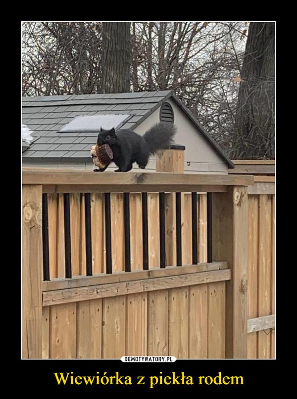 Wiewiórka z piekła rodem –