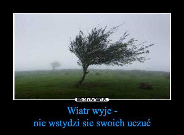 Wiatr wyje -nie wstydzi sie swoich uczuć –