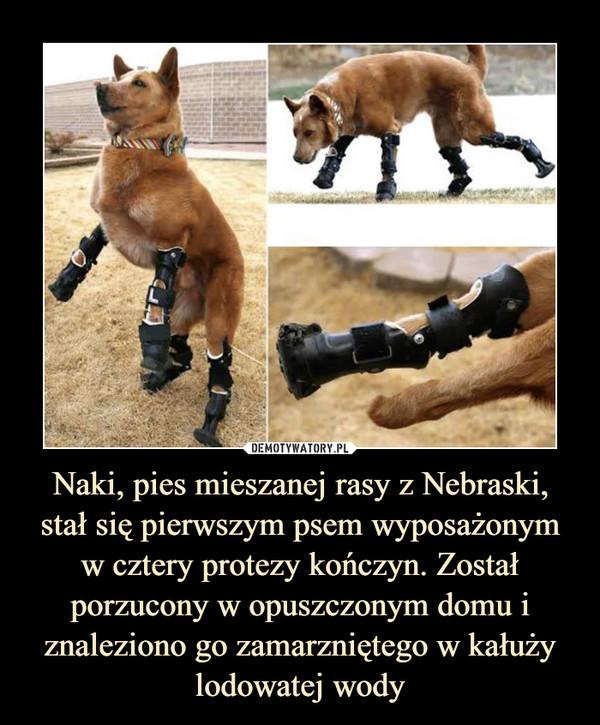 Naki, pies mieszanej rasy z Nebraski, stał się pierwszym psem wyposażonym w cztery protezy kończyn. Został porzucony w opuszczonym domu i znaleziono go zamarzniętego w kałuży lodowatej wody –