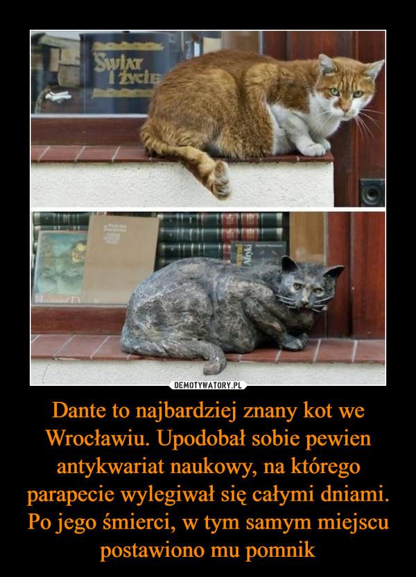 Dante to najbardziej znany kot we Wrocławiu. Upodobał sobie pewien antykwariat naukowy, na którego parapecie wylegiwał się całymi dniami. Po jego śmierci, w tym samym miejscu postawiono mu pomnik –