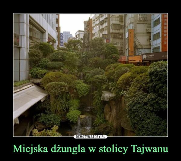 Miejska dżungla w stolicy Tajwanu –