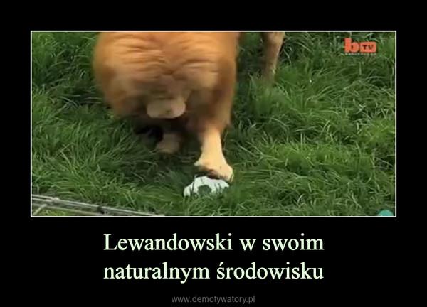 Lewandowski w swoimnaturalnym środowisku –