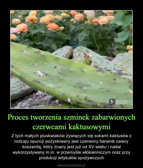 Proces tworzenia szminek zabarwionych czerwcami kaktusowymi – Z tych małych pluskwiaków żywiących się sokami kaktusów z rodzaju opuncji pozyskiwany jest czerwony barwnik zwany koszenilą, który znany jest już od XV wieku i nadal wykorzystywany m.in. w przemyśle włókienniczym oraz przy produkcji artykułów spożywczych