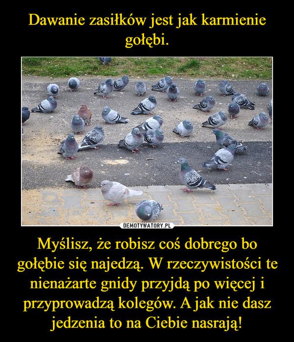 Myślisz, że robisz coś dobrego bo gołębie się najedzą. W rzeczywistości te nienażarte gnidy przyjdą po więcej i przyprowadzą kolegów. A jak nie dasz jedzenia to na Ciebie nasrają! –