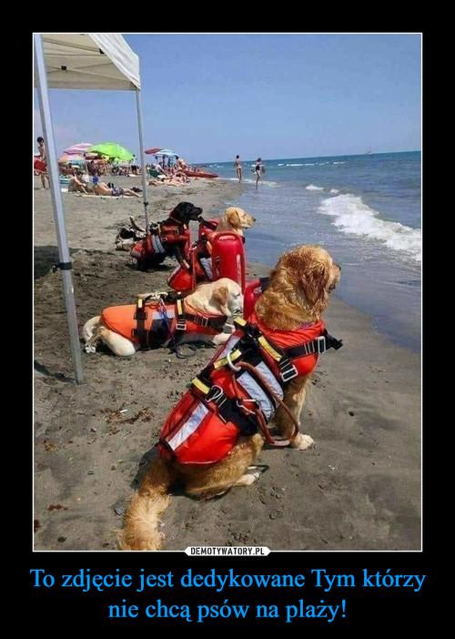 To zdjęcie jest dedykowane Tym którzy nie chcą psów na plaży!