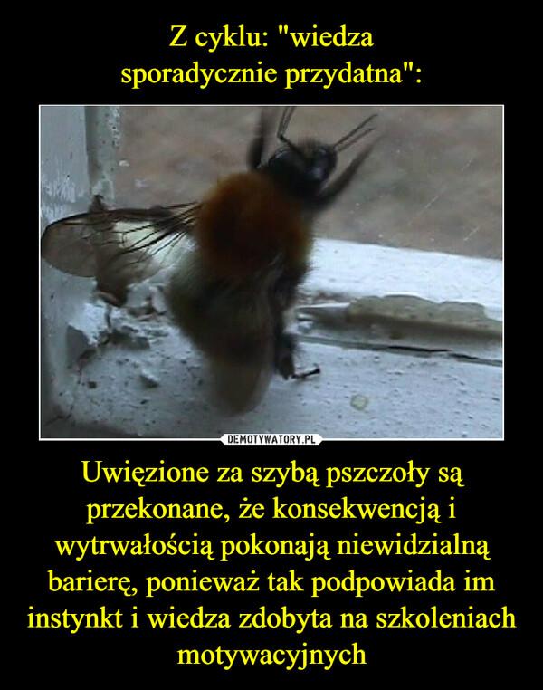 Uwięzione za szybą pszczoły są przekonane, że konsekwencją i wytrwałością pokonają niewidzialną barierę, ponieważ tak podpowiada im instynkt i wiedza zdobyta na szkoleniach motywacyjnych –